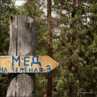Указатель для Винни Пуха :: Наталия Григорьева