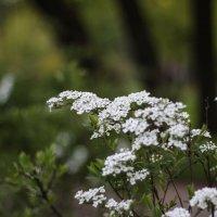 Весна, весна... :: Дина Нестерова