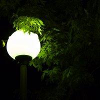 парковый фонарь :: Вадим Кулаев