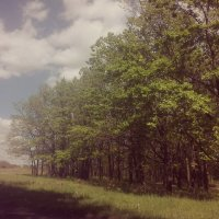 солнечный денек :: Valeriya Voice
