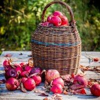 Осенние дары. :: Виктор Седов