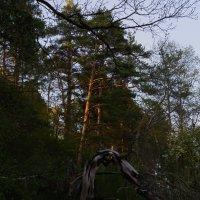 Сухое дерево. :: prostow