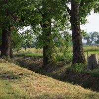 Прогулка вдоль канавки :: Galia Rota