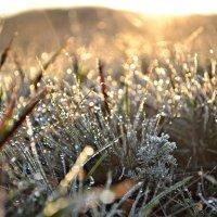 Трава в украшениях :: Олеся Стоцкая