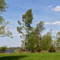 майский ветер :: Galina