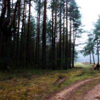 Путь домой :: Valery Kechter