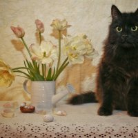 Тимофей-цветочек... :: Svetlana Sneg