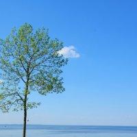 одинокое дерево :: Роман