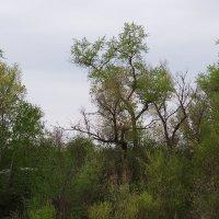 У леса :: Валерий Лазарев