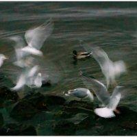 Сон с птицами :: Кай-8 (Ярослав) Забелин