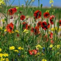 цветы :: Максим Павлюченко