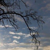 Небо в полоску :: Вера Моисеева