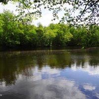 Лесной водоём. природа :: Антонина Гугаева