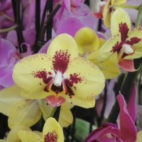 Орхидеи :: Лебедев Виктор