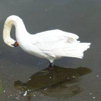 На озере Нижний Кабан :: Наиля