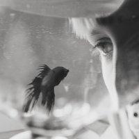 Глаза в глаза :: Ирина Сиротова