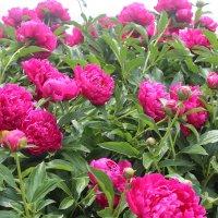 Любимые цветы :: Valeri Kn