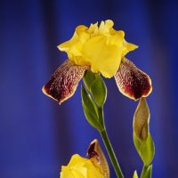 природная красота и грация в простоте :: Юлия Скиданова