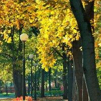 Золотая осень :: Денис Масленников