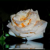 Сколько шарма,нежности,изыска,сколько силы в царственном цветке! :: Людмила Богданова (Скачко)