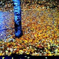 Осень :: Xenia Togacheva