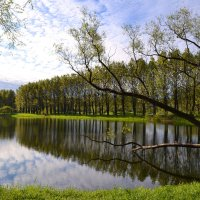 Утро в парке :: Наталья Левина