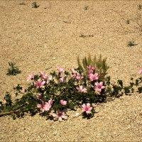 Пустыня :: Аркадий Голод