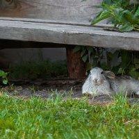 Кролик отдыхает :: Алина Репко