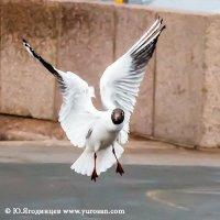 """Белый танец"" :: Юрий Ягодинцев"