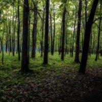 Волшебный лес :: Сергей Семенов