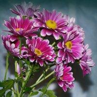Весенний букет хризантем :: Ростислав