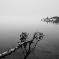 В тумане. :: Alexander Antonov