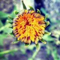 Цветок :: Nazar Guziy