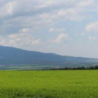 Зелёный пейзаж :: Ольга Акимова