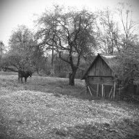 Сельская жизнь :: Юрий Бондер