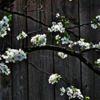 Икебана. Веточка сливы. Ikebana. Sprig of plum. :: Юрий Воронов