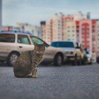 кошка :: Andrei Naronski