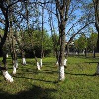 Танцующие деревья :: Андрей Зайцев
