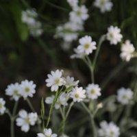 Цветочный хоровод-45. :: Руслан Грицунь