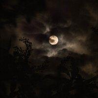Луна :: Сергей Судьин
