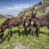 Групповой портрет крымских осликов :: Алексадр Мякшин