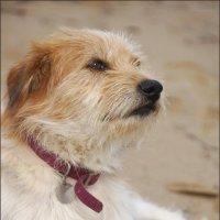 Гордый пёс :: Наталия Григорьева