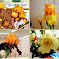На выставке цветов :: Нина Бутко