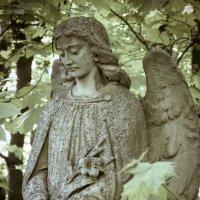 Angel :: Maggie Aidan