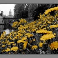 Время..жёлтого.... :: tipchik