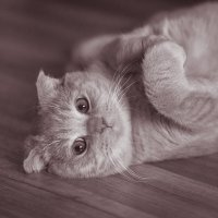 я вовсе не котик, я зайчик :: Татьяна Исаева-Каштанова