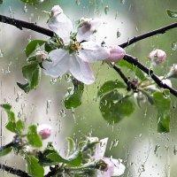 Дождь... :: Ирина Шарапова