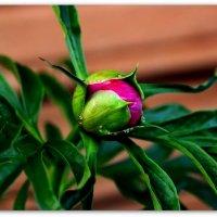 """Аленький цветочек."" :: Galina S*"