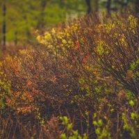 Растения :: Юлия Другова