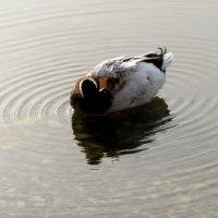 Тихие воды :: Наталья (D.Nat@lia) Джикидзе (Берёзина)